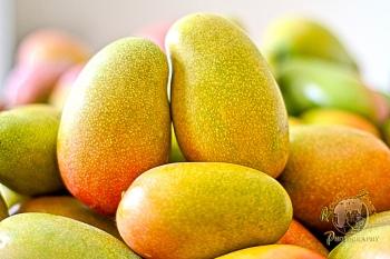 east indian mango