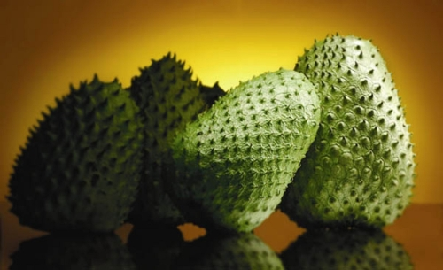 Jamaican soursop benefits