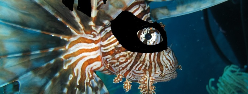 lionfish ninja 2