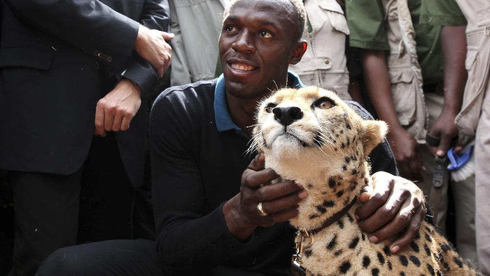 Usain Bolt vs. a Cheetah – THE ISLAND JOURNAL
