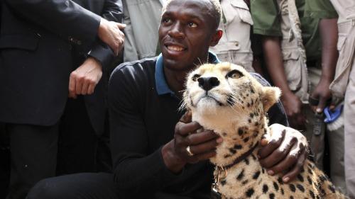 Usain Bolt vs. cheetah