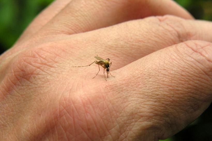 chikungunya virus outbreak in Jamaica
