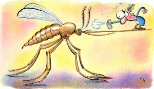 chikungunya and mosquitoes courtesy of nytimes-com