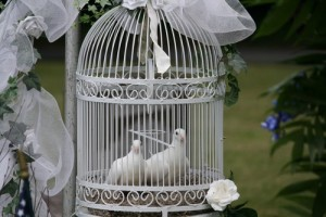 White wedding doves courtesy of beetreetrail-com