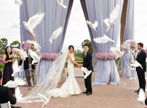 White wedding doves courtesy of wdrelease-com