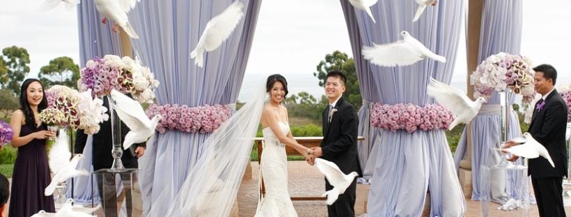 White wedding doves courtesy of wdrelease-com
