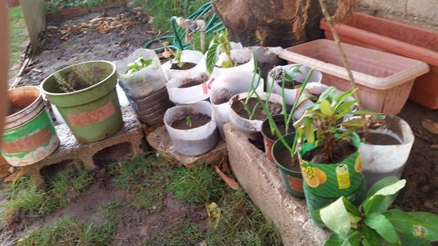 Jamaican Urban Organic Farming: Small Crops