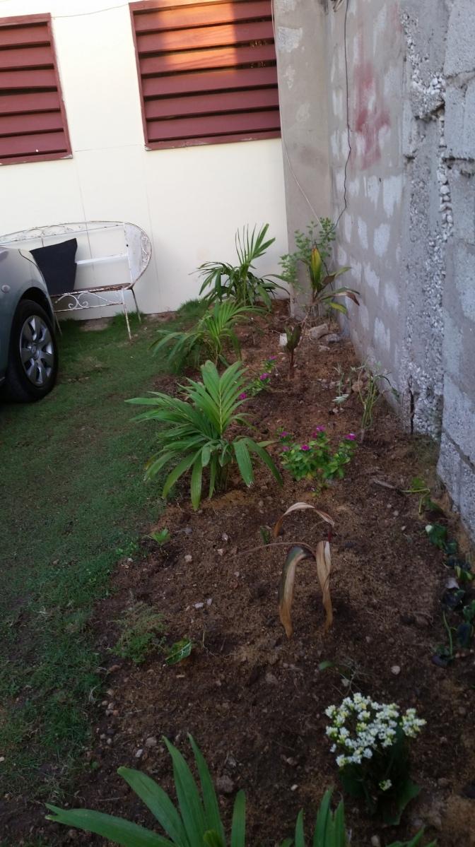 Jamaican Urban Organic Farming: No Instant Perfection