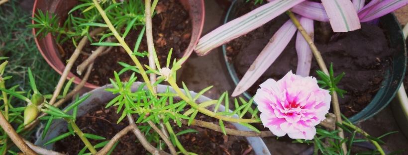 Jamaican Urban Organic Farming: Container Gardening