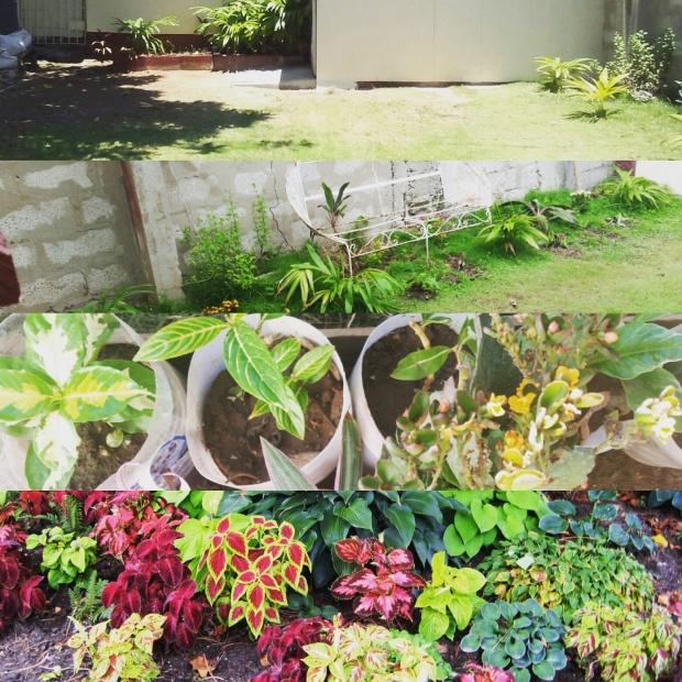 Jamaican Urban Organic Farming: Gardening Goals