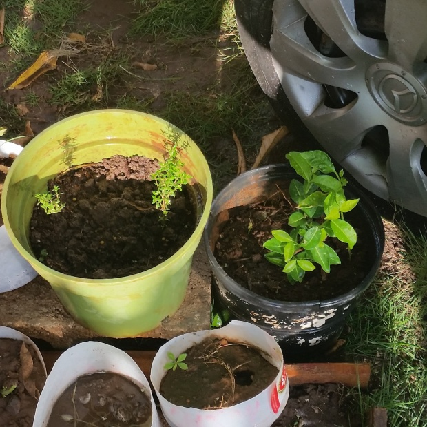 Jamaican Urban Organic Farming: It's Alive