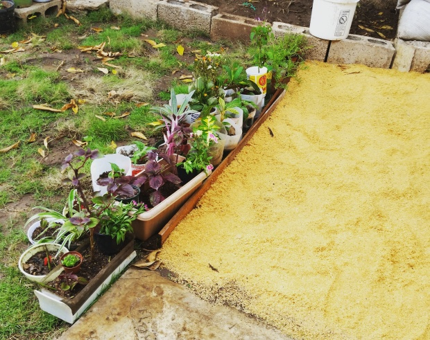 Jamaican Urban Organic Farming: Sawdust Path