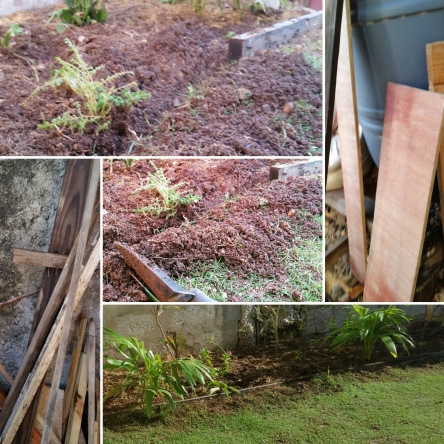 Jamaican Urban Organic Farming: Separating The Plants From The Lawn