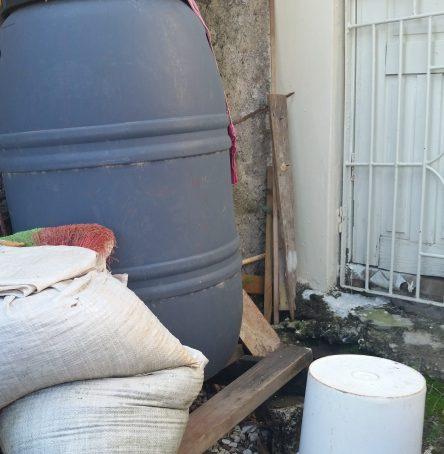 Jamaican Urban Organic Gardening: Views From My Garden #8