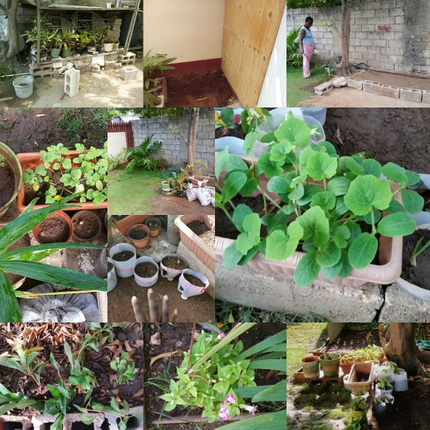 Jamaican Urban Organic Gardening: Views From My Garden #1