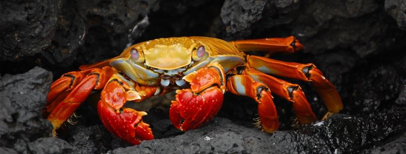 How to Cook Crab the Right Way